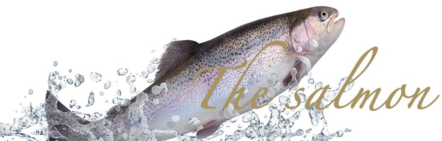 salmonwilden940300